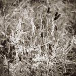 PhilipKing - StiperstonesSilvergrass - 254x254mm@72dpi