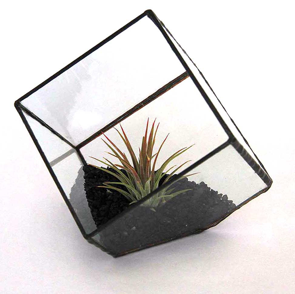 Cuboid glass planted sculpture