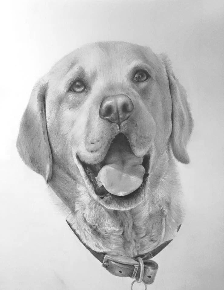 Bailey dog portrait pencil