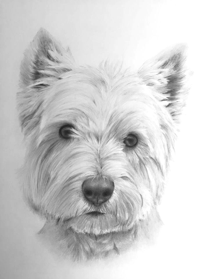 Ralph dog portrait pencil