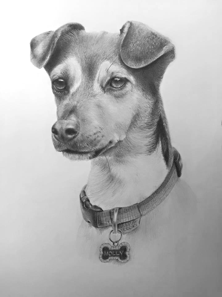 Molly dog portrait pencil
