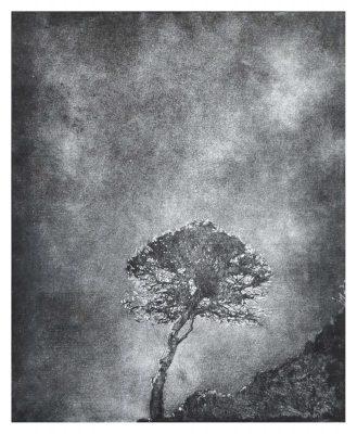 Jenny Gunning - Lonely Tree 2