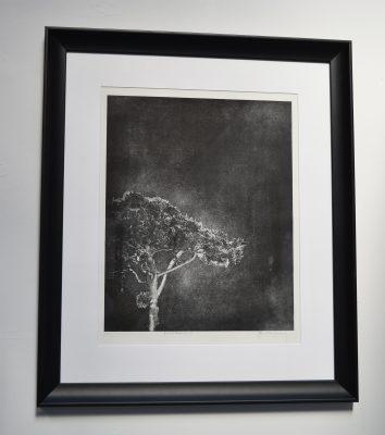 Jenny Gunning - Lonely Tree