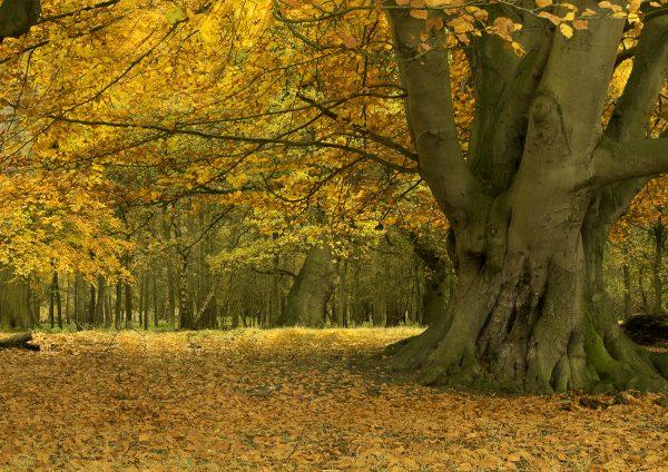 Autumn shade by David Jones