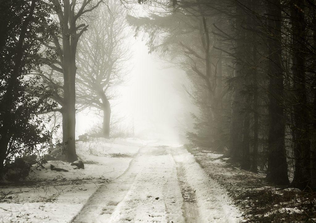 Misty Path by photographer David Jones